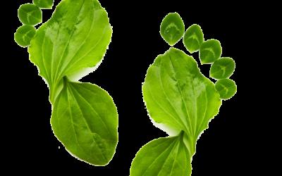 Nuestros embutidos, 100% ecológicos